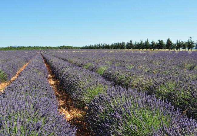 Villa à Sillans-la-Cascade - Location Saisonnière en Provence : Villa Pinède